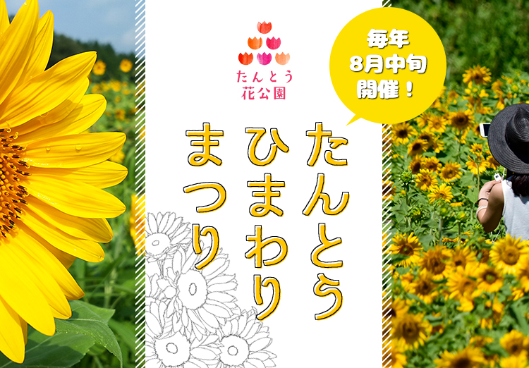 Tanto Sunflower Festival