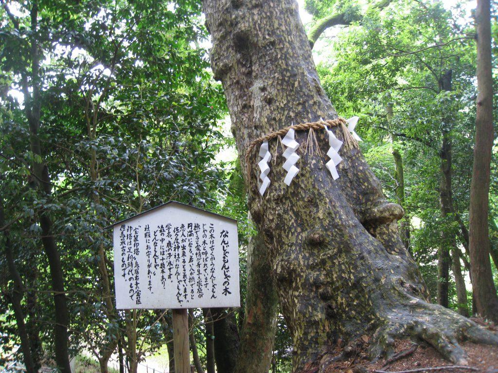 なんじゃもんじゃの木と佐々伎神社