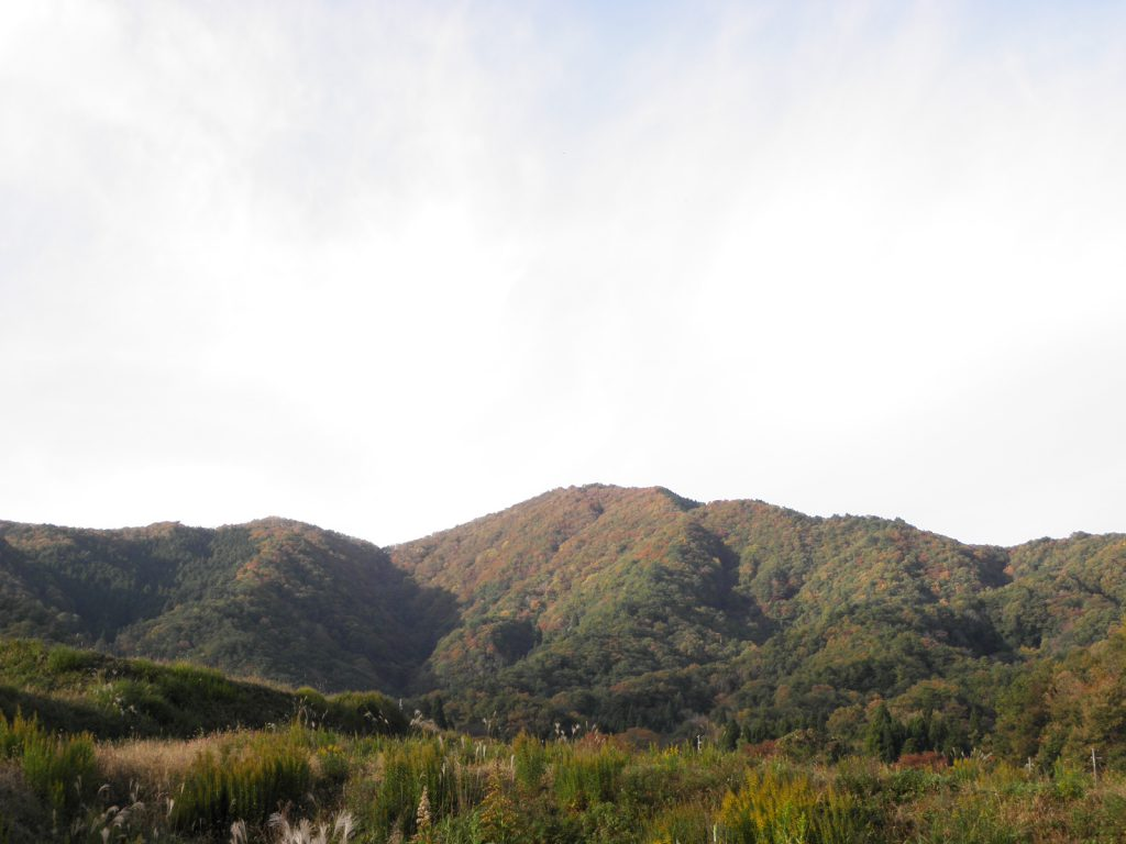 高竜寺ヶ岳(こうりゅうじがたけ) 696.7m