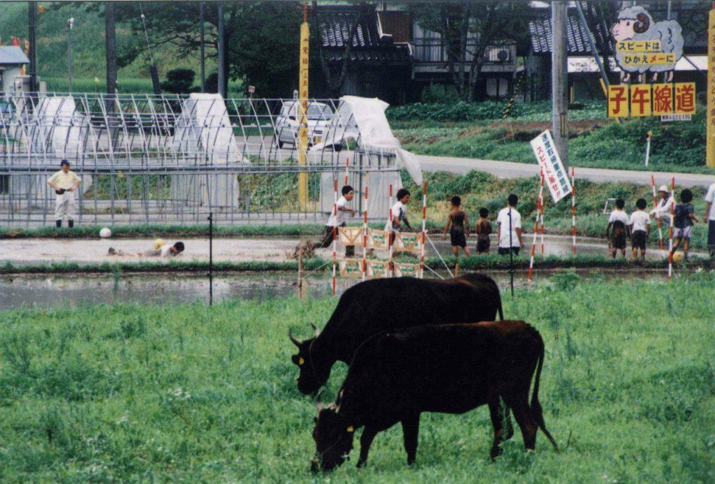 和牛・乳牛
